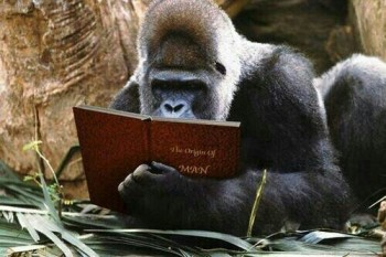 Story Reading Ape