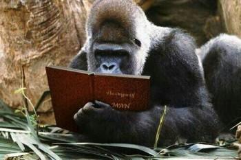 Story Reading Ape