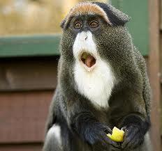 Surprised monkey 2